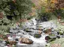 「河鹿の滝」付近の自然研究路