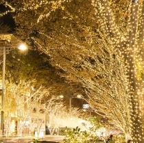 ◇表参道クリスマスイルミネーション◇