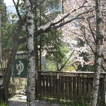 大露天風呂への入り口(春)