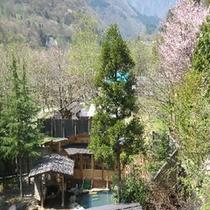 大露天風呂遠景(春)
