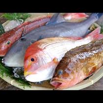 津居山港に水揚げされた新鮮な魚介類♪