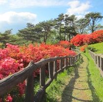 【田束山】山頂の散歩道、景色のいいところです、5月...