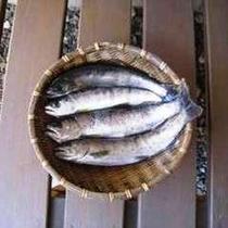 ●3月1日より渓流釣りが解禁
