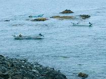 早朝のウニ漁の様子を見られることも。