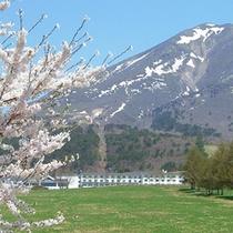 町営牧場の桜並木と狐雪が残る磐梯山