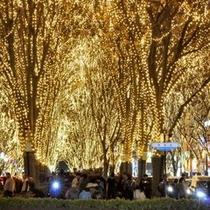 【SENDAI光のページェント】仙台冬の風物詩☆素敵な思い出を作りに是非、お越しくださいませ!