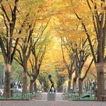【プラン】 【定禅寺通り:秋】ケヤキ並木が色づいていてとってもキレイです♪