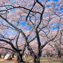 【榴岡公園】当ホテルから徒歩5分♪春は桜の名所としても有名です。お花見にぜひどうぞ!!