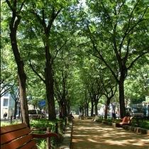 季節ごとに景色を変える【定禅寺通り】当ホテルから最寄の地下鉄駅で1駅 定禅寺通り