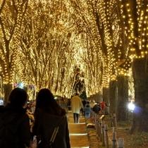 12月イベント_見るもの全てを魅了する光のページェント