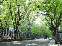 市街地ながら新緑がまぶしい定禅寺通