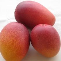 なんごうDEマンゴープランイメージ2