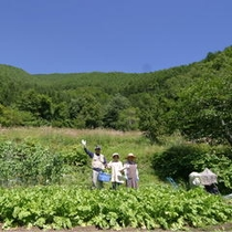 自家農園 自慢の高原野菜をどうぞ
