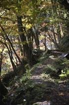 逢滝の散策路