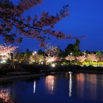 河津桜 夜のライトアップ