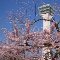 桜の時期の五稜郭タワー