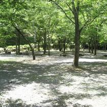 【敷地内一例】ご家族、お友達と自然を満喫できる場所です♪