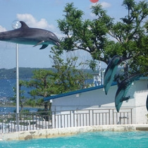 「のとじま水族館」当館からお車で90分。ジンベイザメやイルカショー、近辺の海では野生イルカも見れます