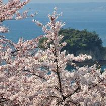 うしつ荘から満開の桜越しに見る遠島山