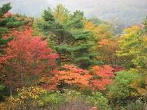 蔵王坊平高原の紅葉