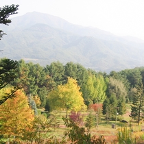 *庭園/秋には紅葉の時期のお散歩がオススメです。