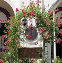 鮮やかなバラの花が植えられた外観
