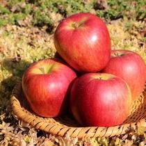 当館果樹園で採れたリンゴ
