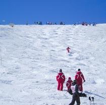 スキーバッチテスト