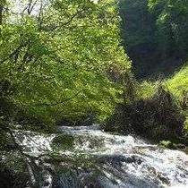 横谷渓谷はお気軽トレッキングコースとしてもうってつけ 清流の脇を歩けます。