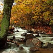*近くに流れる川のせせらぎに誘われて…ここにも秋を見つけました
