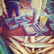 漁港で浜売り