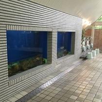【虹マス風呂】*とーーっても大きい水槽です!