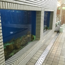 【虹マス風呂】日本で唯一?!水槽がある温泉