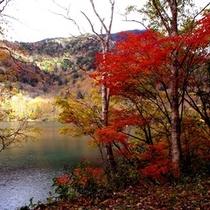 【丸沼湖畔の紅葉】*秋
