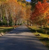 【風景*秋】紅葉の見頃は10月中旬ごろ