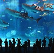 海洋博記念公園 美ら海水族館