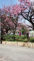 2月には桜も満開♪