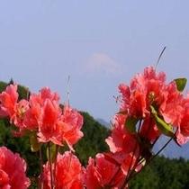 【お花まつり】長者ヶ原つつじ(南伊豆)5/5~5/20遊歩道の周りを山ツツジが咲きます♪