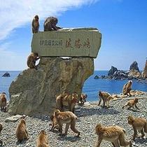 【波勝崎】お猿の楽園!東日本最大の野猿の生息地