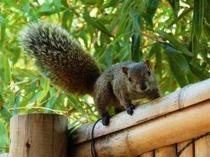 【里山の動物】自然のリスが現れることも