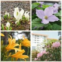 ◇春から初夏の草津は、様々な高山植物の宝庫です。