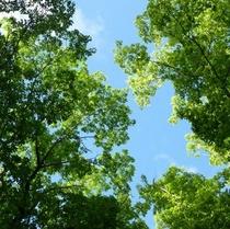 ◇緑の深い夏の森林浴「6月下旬~8月頃」