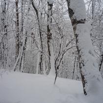 【ホテル周辺・冬の自然】冬の森は、スノーシューを履いて散策することができます。