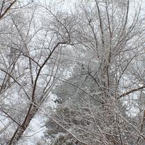 【ホテル周辺・冬の自然】ホテルで開催の自然散策ツアーもあります。