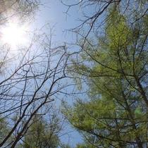【ホテル周辺・春の自然】新緑の季節、森林浴コースは緑と野鳥の声に包まれます。