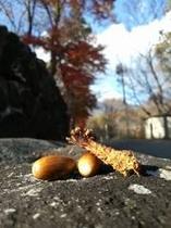 秋には紅葉&散策〜!