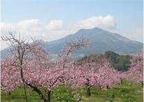 桃の花(モバイル)
