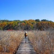 秋の『唐花見湿原』