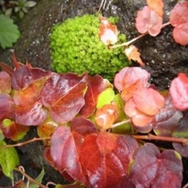 庭園の苔。