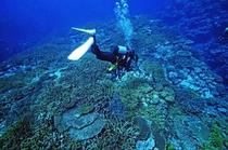 ダイビング珊瑚